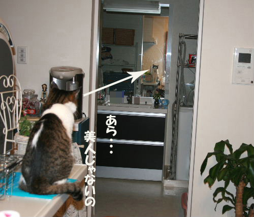 鏡を見るめい