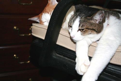 夫の椅子で2