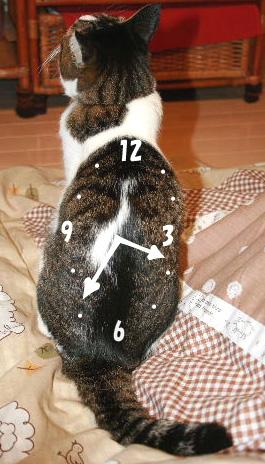 めい時計のコピー
