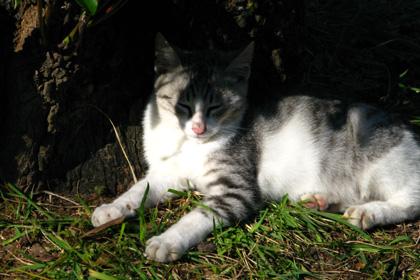 多賀山公園のネコ