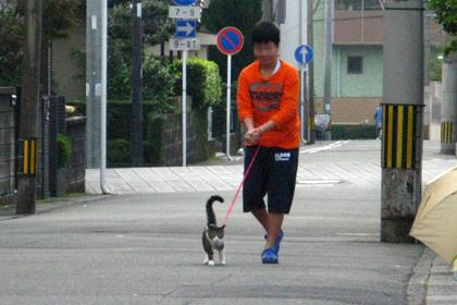 ネコを散歩させる