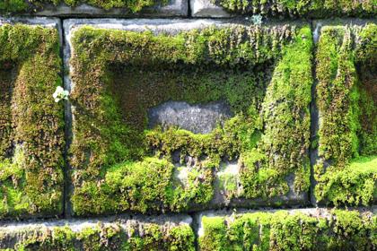 ブロックの苔