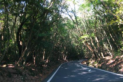 霧島の山道
