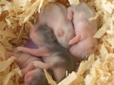 2赤ちゃんハム1123-1
