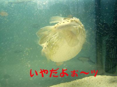 不機嫌BONちゃん2