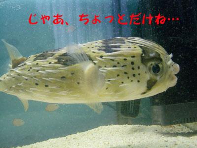 不機嫌BONちゃん3