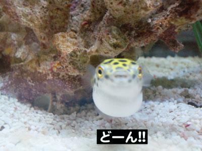 DONちゃんPONちゃん2