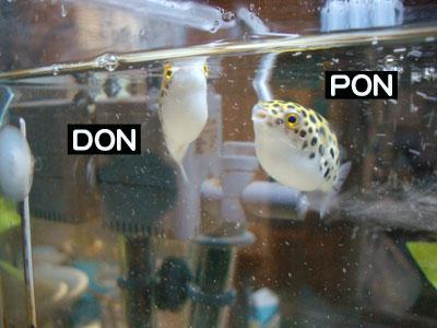 DONちゃんPONちゃん4