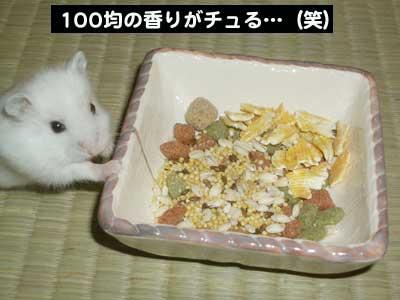 大福ちゃんと新しいお皿