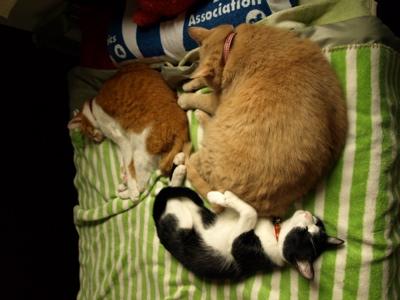 3匹添い寝4