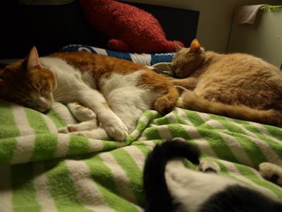 3匹添い寝1