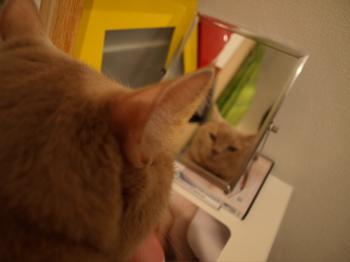 鏡の中の私1