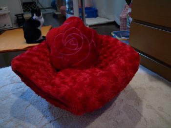 バラのベッド1