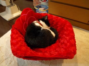 バラのベッド3