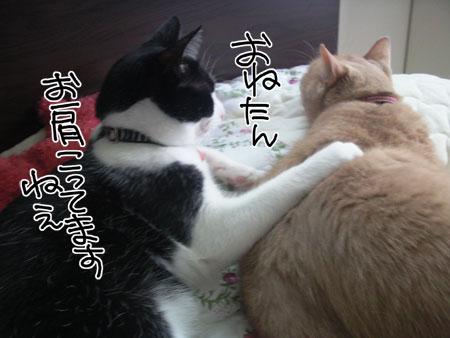 肩モミ_くろ1