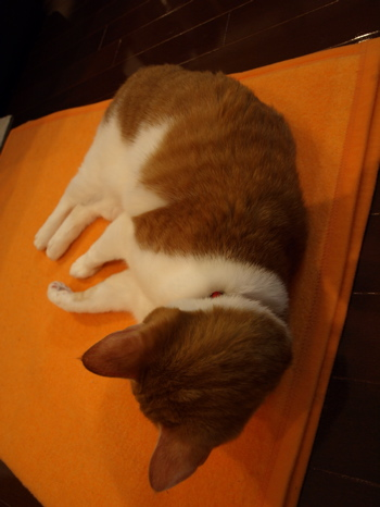 なめさんの寝姿1