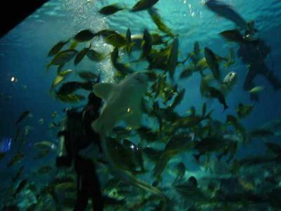 へウンデ水族館