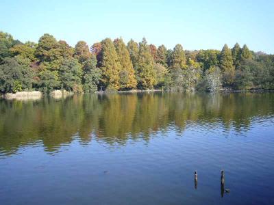 石神井 池