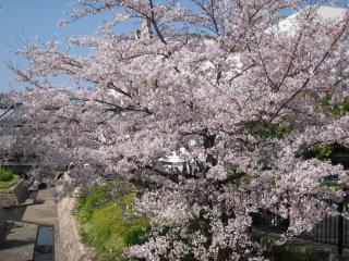 水辺と桜は出会いもの(^^)