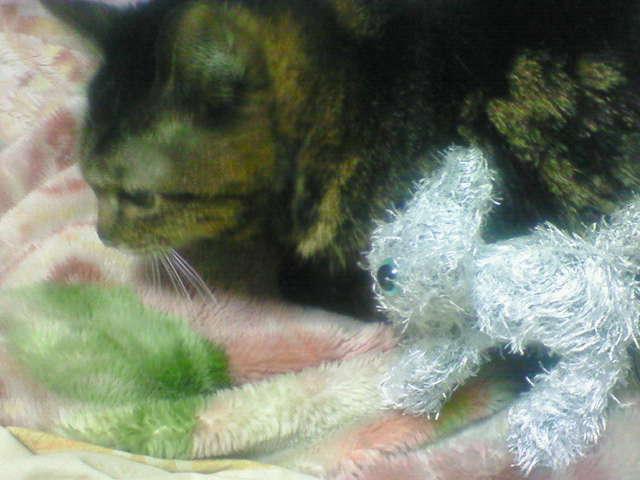 猫とネコ♪(=^ω^=)