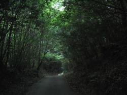fushigi_888_01.jpg