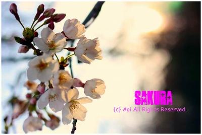 s-IMG_6932.jpg