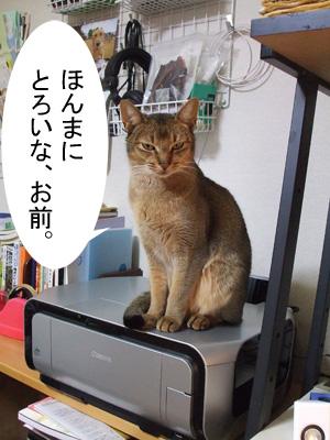 toroi