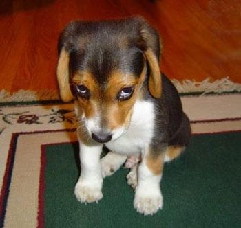 sorrydog.jpg
