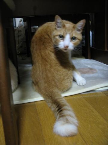 Img_0198-totora-furimuki.jpg