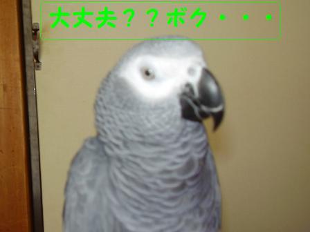 20071019211532.jpg