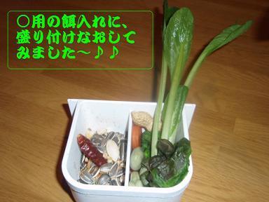 ○用餌いれに盛り付け2