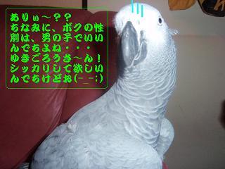 P4201405.jpg