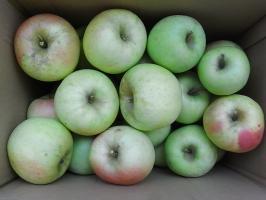 りんごはこ