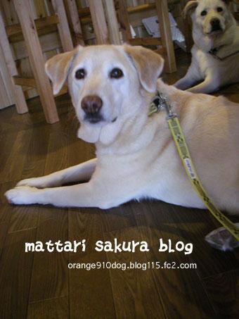 saku-koyuki.jpg