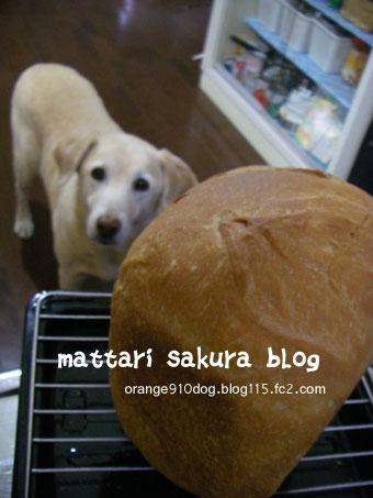 sakurano_20090205105606.jpg