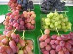 葡萄の店2