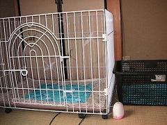 サークルと籠