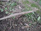 この木にひっかかちゃいました!