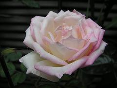 プリンセスドゥモナコ