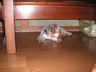 ベンチの下が好き