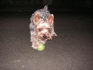 ぼく、ボールで遊ぶからいいよ