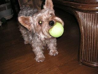 このボール、おねーちゃんにもらったんだよ