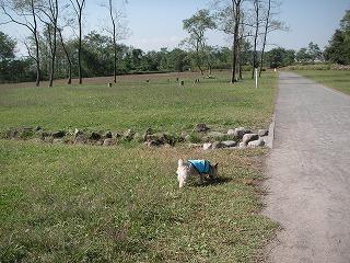 貸切の公園