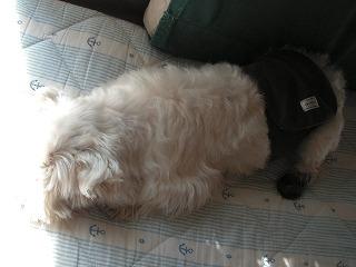枕のようなむぐ