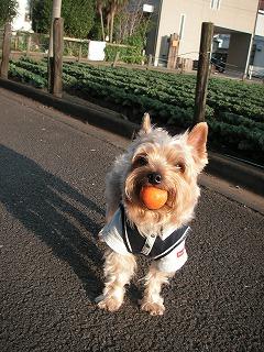 ボール遊びだぁ~いすき!