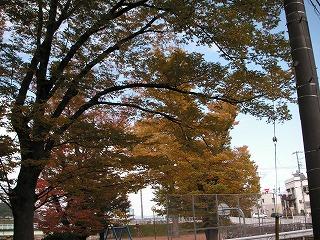 多摩川沿いの紅葉