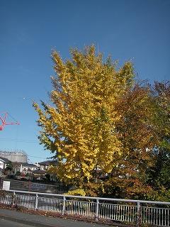 秋を見つけた