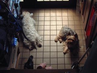 玄関で寝んね