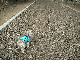 遊歩道をお散歩