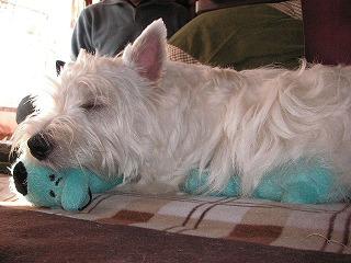 玩具の上で寝るりゅん